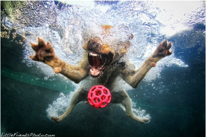 funny+photography+dog+chasing+ball+underwater+swimming+cute+pet+animal