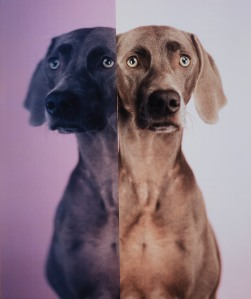 17832-1367863315-WilliamWegman