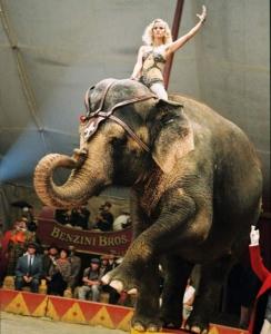 circus-3_1984859a