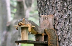 squirrels-2d15-jpg