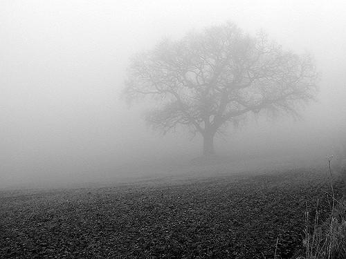 beenwoodward.fog