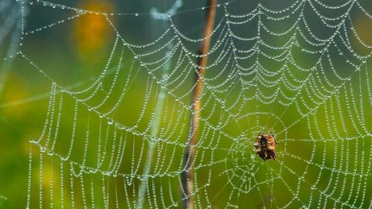 dew.spider