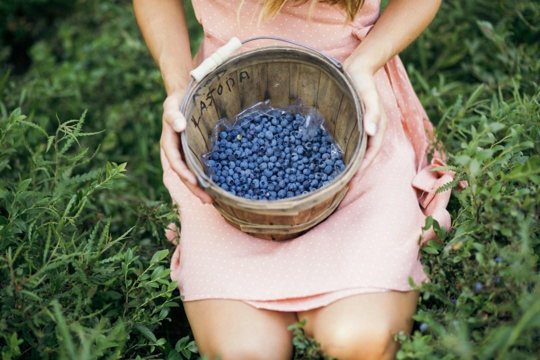 berry.picking