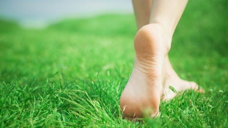 ffet.grass2